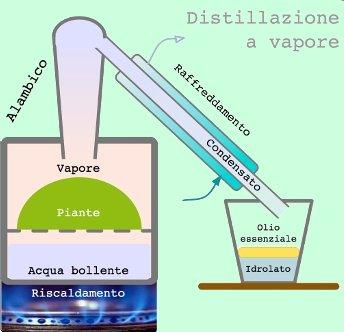 Oli essenziali - distillazione in corrente di vapore