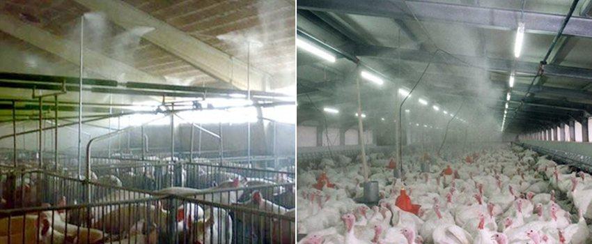Allevamento zootecnico: utilizzo del fogging per diffondere il prodotto biologico