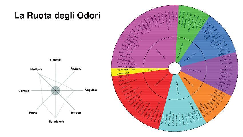 Analisi Olfattometriche - la ruota degli odori, che definisce tutti i principali fragranze chimiche